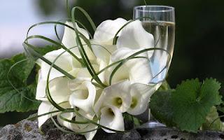 Gambar Bunga Lili Putih Yang Cantik_White Lily 201602