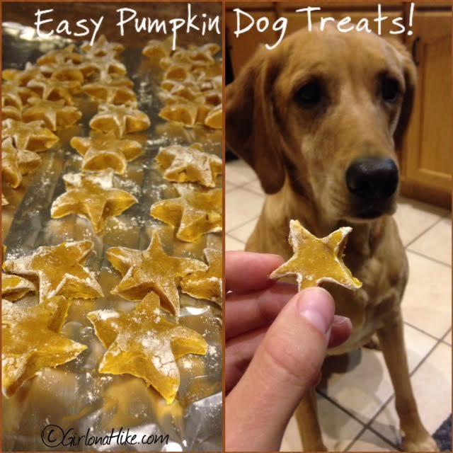 Easy Pumpkin Dog Treats recipe