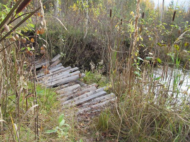 деревянный мостик в лесу