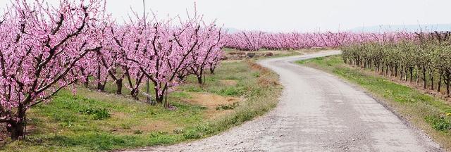 Lleida en flor