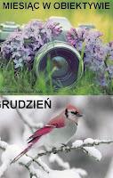 http://misiowyzakatek.blogspot.com/2016/12/miesiac-w-obiektywie-grudzien.html