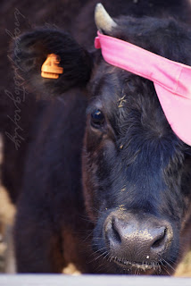 Wowcow Burwood - Black Baby Calf