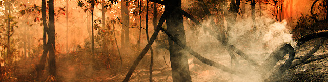 Melindungi Hutan Gambut, Harga Mati untuk Menjaga Indonesia