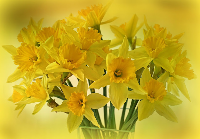 Look For The Sunshine, Daffodils, Living from Glory To Glory Blog...