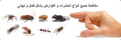 شركة مكافحة حشرات بالاحساء