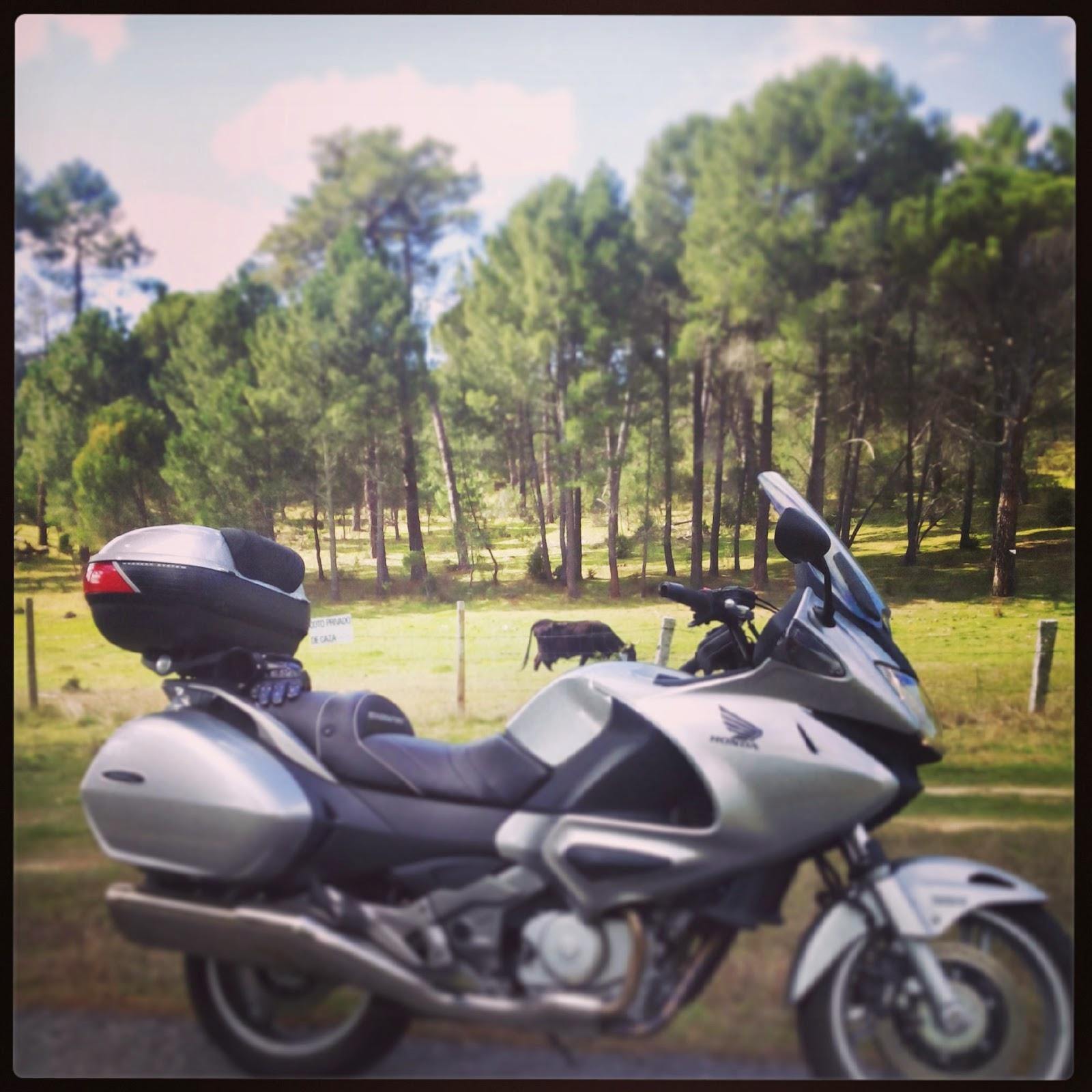 RUTA EN MOTO DE 103 Km HOYOS DE PINARES