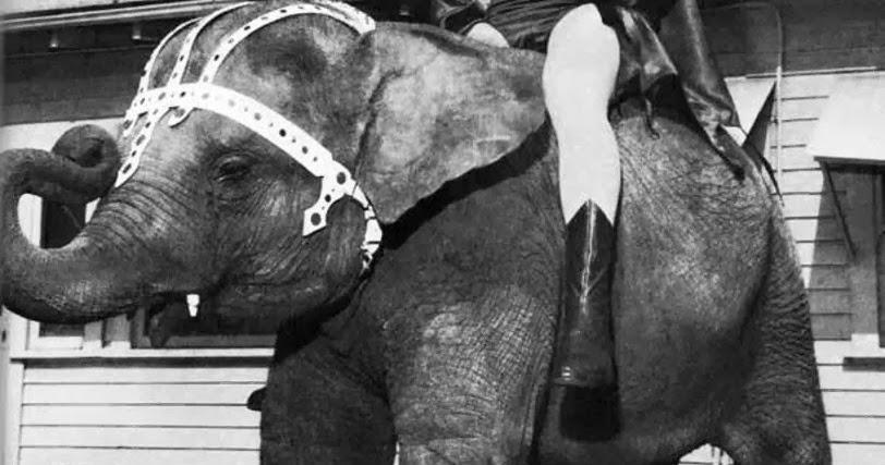 Batman Riding A Small Elephant, 1967  Vintage Everyday-4050