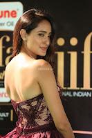 Pragya Jaiswal Sizzles in a Shantanu Nikhil Designed Gown  Exclusive 009.JPG