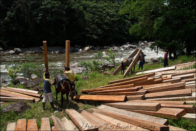 What Colombian horses are supposed to do, moving lumber, Chris Baer,