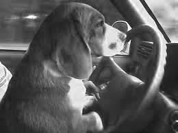 Como puede este perro Comparar Seguro para Auto en Florida con diferentes compañías