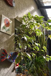 Patios urbanos pequeños. Plantas en maceta, resistentes y bajo mantenimiento.