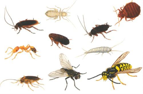 Os insetos são invertebrados com exoesqueleto quitinoso, corpo dividido em três tagmas (cabeça, tórax e abdômen), três pares de patas articuladas, olhos compostos e duas antenas. Seu nome vem do latim insectum. Pertencem à classe Insecta e compõem o maior e mais largamente distribuído grupo de animais do filo Arthropoda e, consequentemente, dentre todos os animais. A ciência que se dedica a estudar os insetos é conhecida como Entomologia.