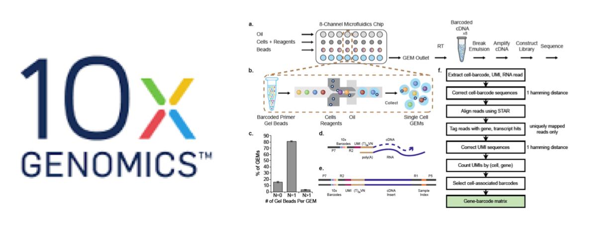 CoreGenomics: 10X Genomics single-cell 3'mRNA-seq explained