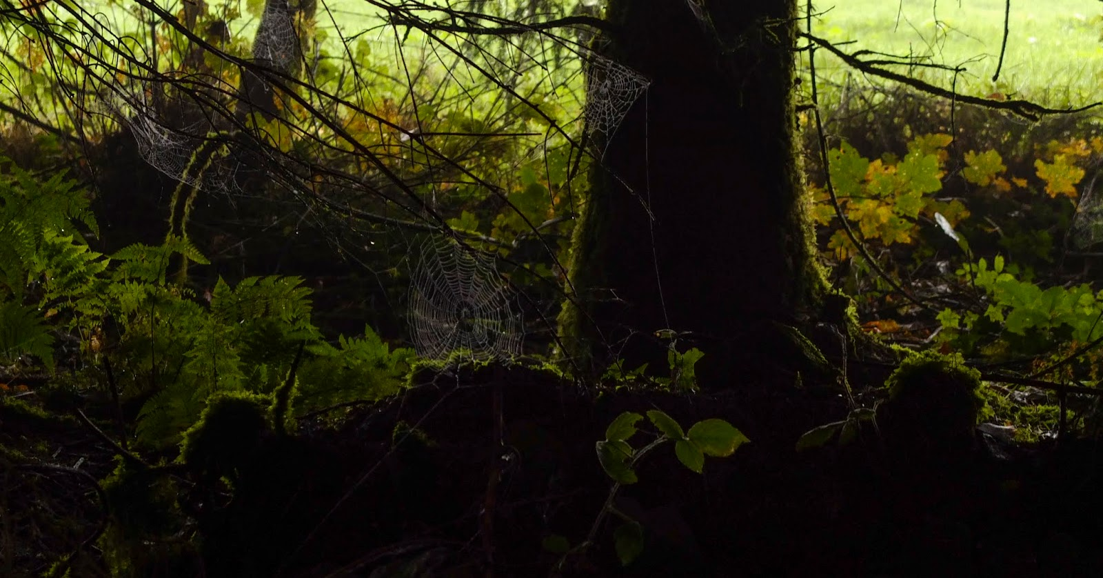 Spider webs hidden in the shadow at the edge of a forest glowing in the light.