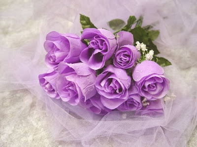 Purple-Rose-rose-wallpaper