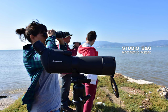 Εκδήλωση παρατήρησης πουλιών στον υδροβιότοπο Ναυπλίου Νέας Κίου (βίντεο)