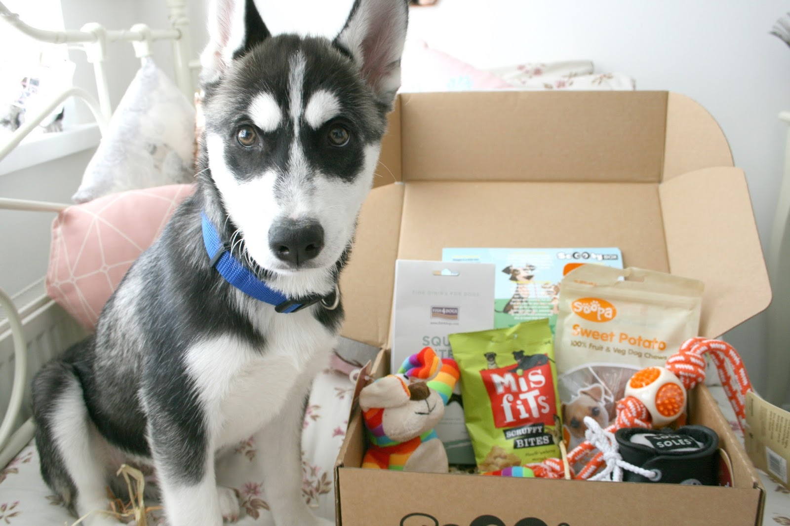 August Scooby Box Husky Dog Subscription Box