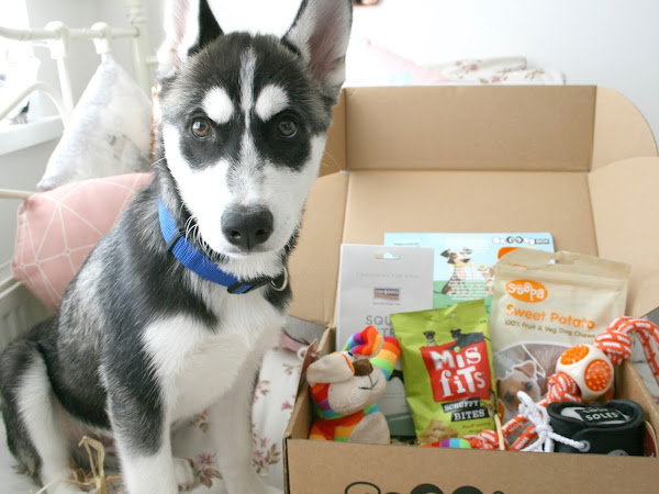 August ScoobyBox || A Monthly Box Full Of Dog Treats & Discount Code