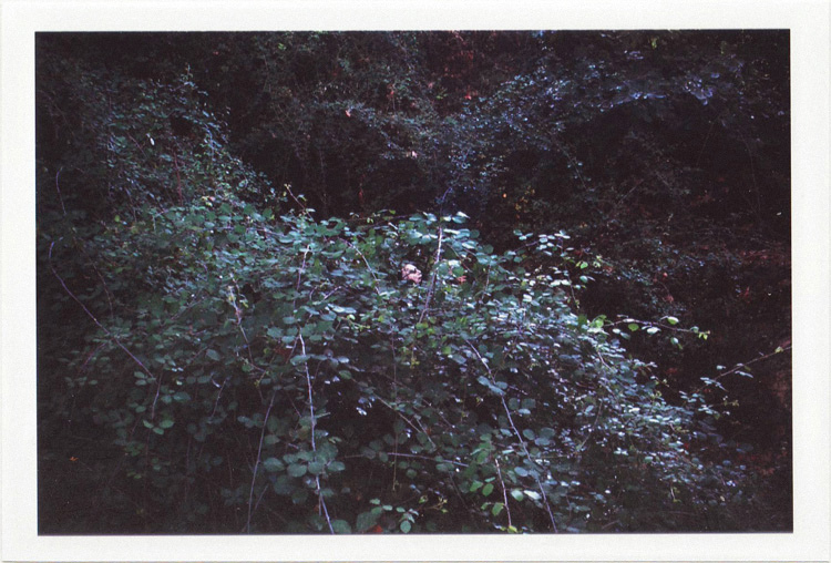 dirty photos - Once - street photo of man pissing inside the bush