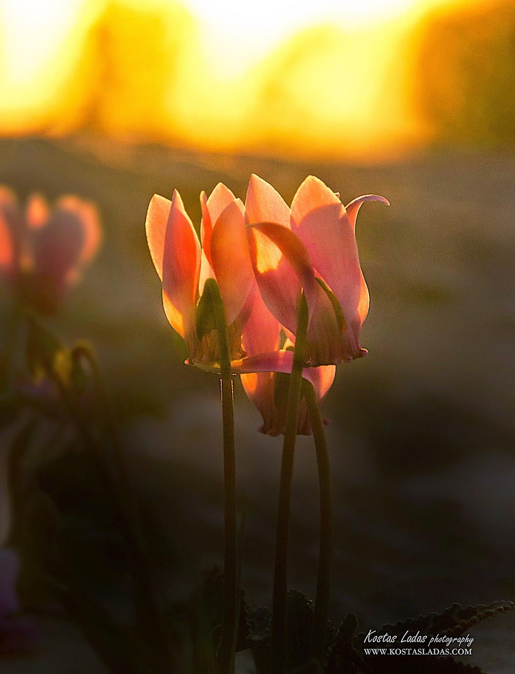 Φυση,χρωματα,λουλουδια,Ελλαδα ,βουνα,flowers