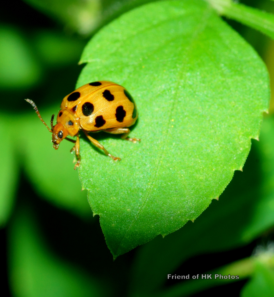 Photographic Wildlife Stories In UK/Hong Kong: Bugs In The