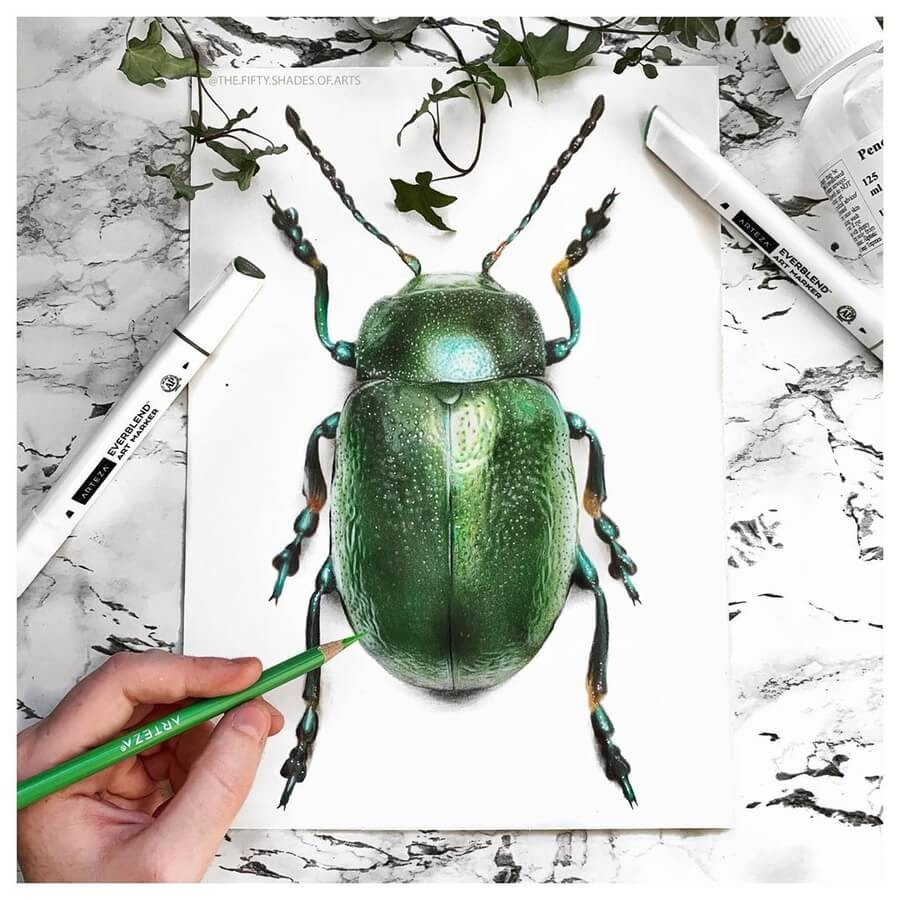 09-Tansy-Beetle-Solene-Pasquier-www-designstack-co