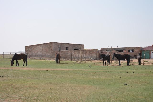 Chevaux près du campement