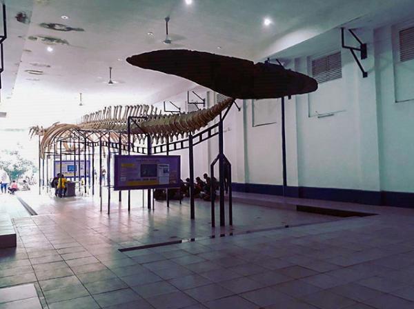 wisata keluarga di bogor Museum Zoologi