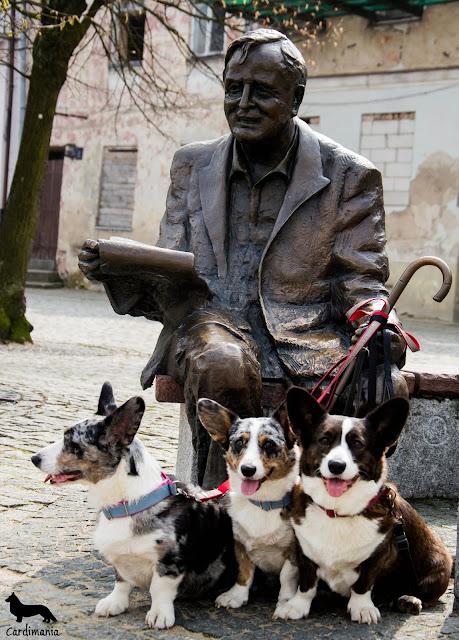 Płock, pies w podróży, podróże z psem, biba, yuma, twiggy, welsh corgi cardogan, welsh corgi, corgi, cardigan, Rynek Stary w Płocku