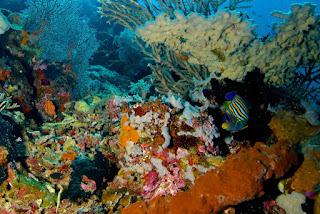 bawah laut taman nasional komodo