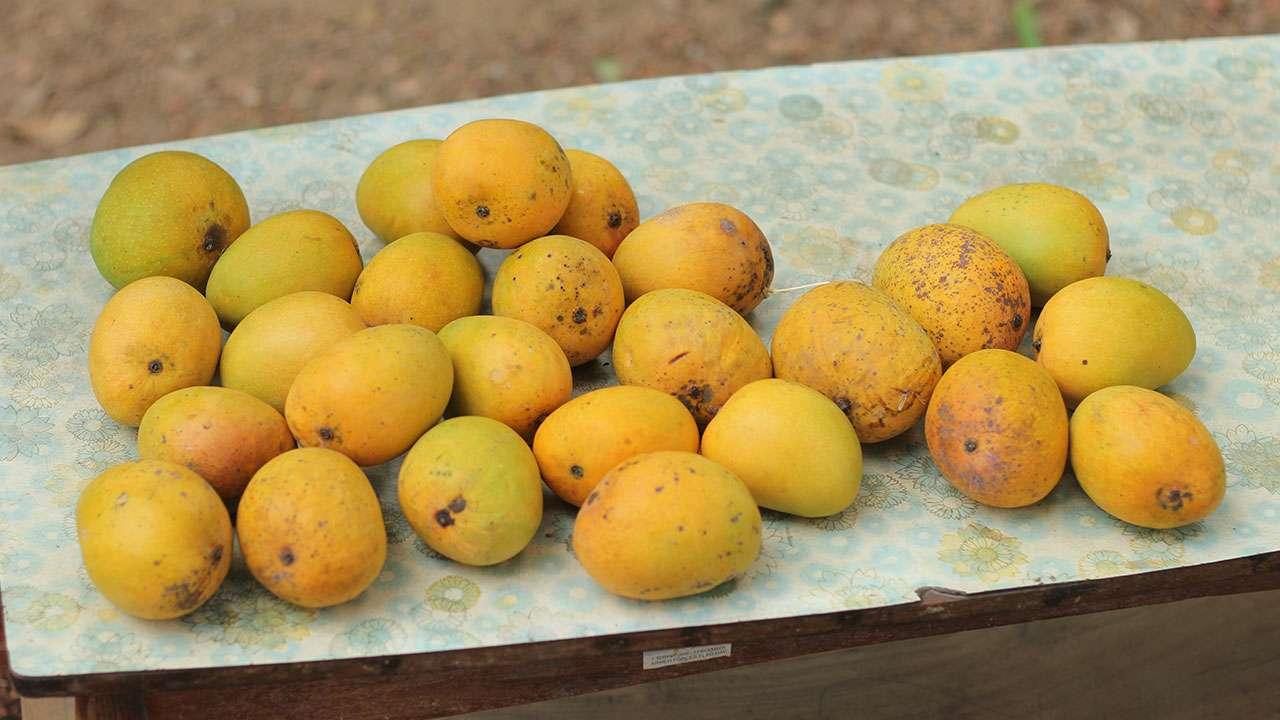 हापूस आंबे