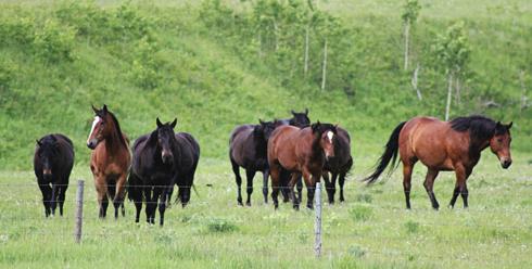 Cowboy Trail Alberta