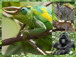 5 Days Gorilla Adventure Safari Bwindi and Mburo National Park, rwanda,safari