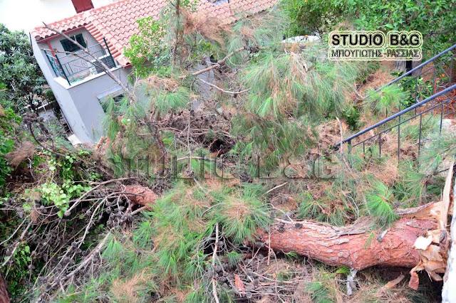 Πτώση δέντρου στην Ερμιονίδα κάτω από καταρρακτώδη βροχή