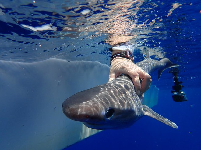 'Resurrected' Shark Species Found Dwelling Deep in the Atlantic