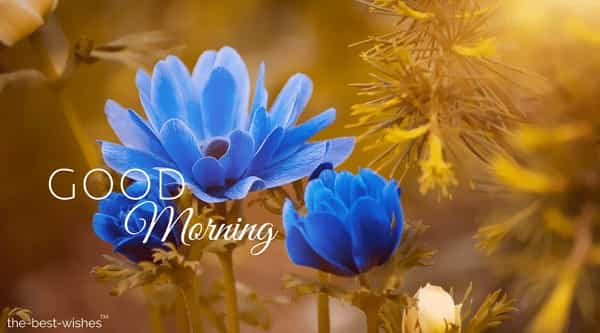 images of nature with beautiful anemone blue flower blossom bloom