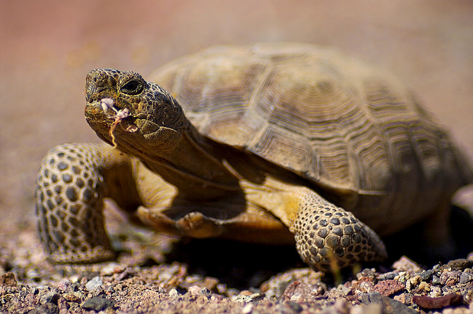 Tortoise Not Eating Food