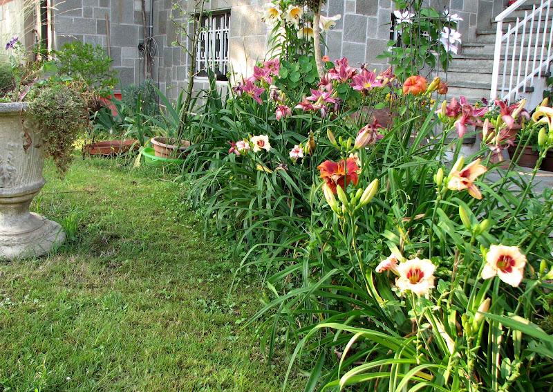 L 39 orto dei colori fiori estivi esagerati for Fiori estivi perenni