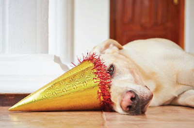dog lying on floor with party hat on