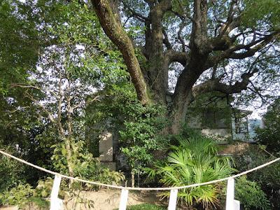 和田賢秀公墓 墓石と楠