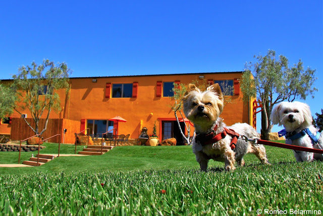 Cottonwood Canyon Dog Friendly Santa Maria Wine Tasting Central Coast