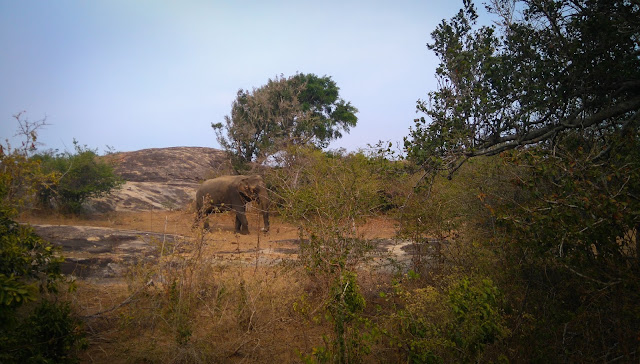 Our first elephant; Yala National Park, Sri Lanka