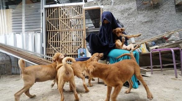 Meresahkan Lingkungan, Rumah Perempuan Pemelihara 11 Anjing Ini Digerudug Warga