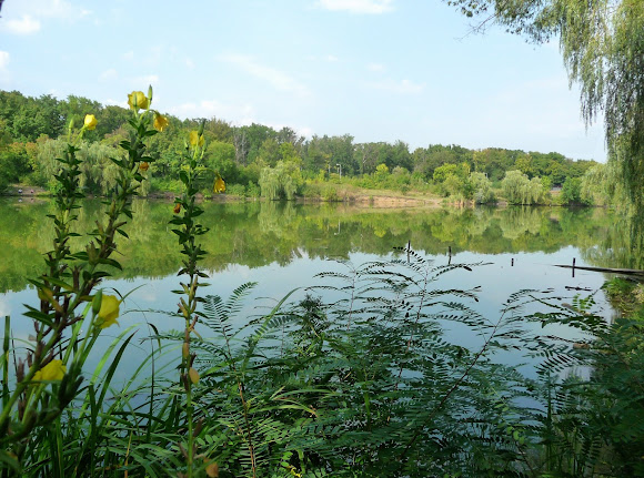 Донецк. Ботанический сад. Пруды