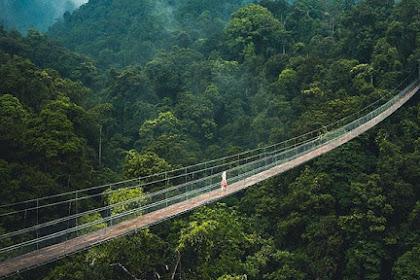 Jembatan Gantung Situ Gunung: Lokasi, Rute, Harga Tiket & Fasilitas