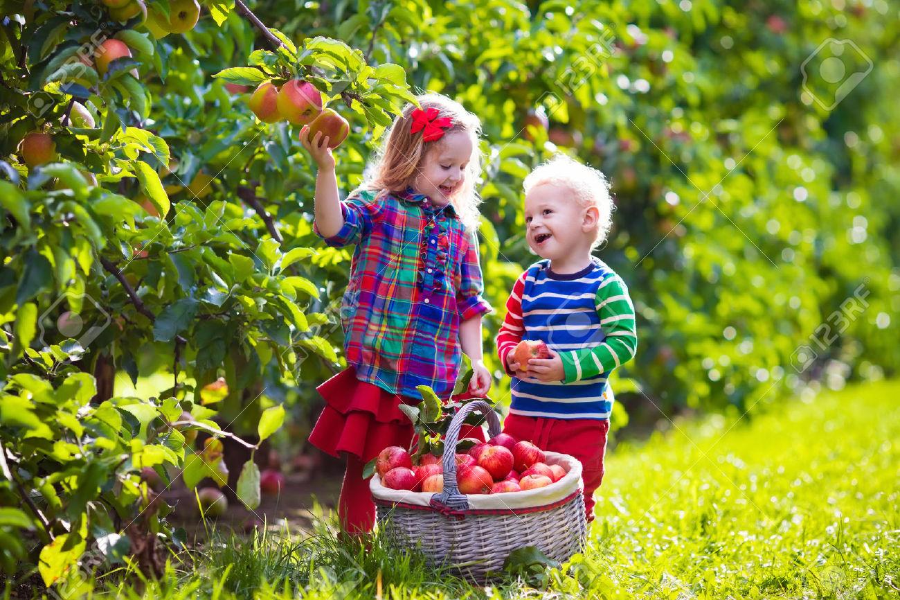 К сему снится искать и не находить фрукты в садах