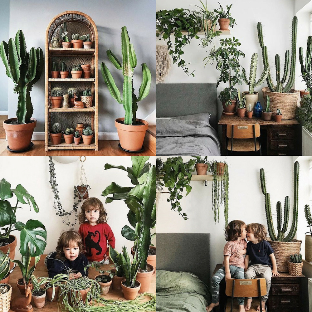 Casa con cactus, plantas de interior y niños