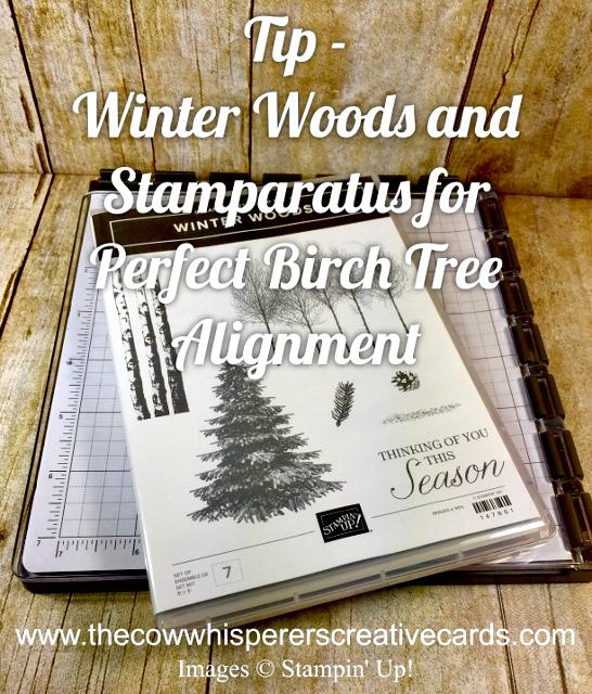 Tip, Winter Woods, Stamparatus, Birch Trees