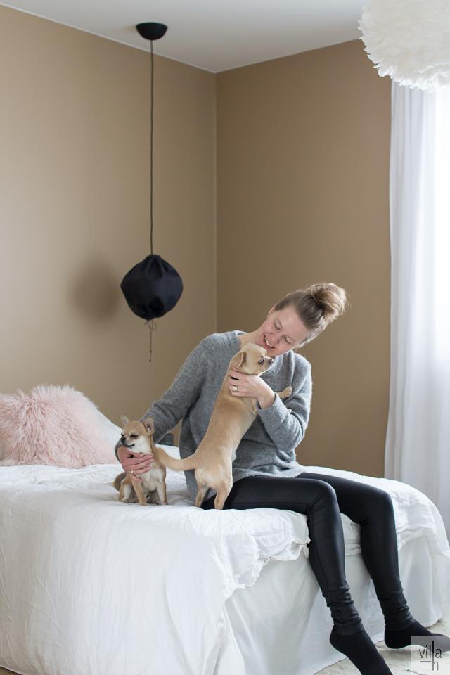 interior, makuuhuone, sisustus, chihuahua