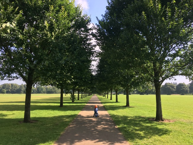 toddler-on-bike-on-long-path-running-through-avenue-of-trees